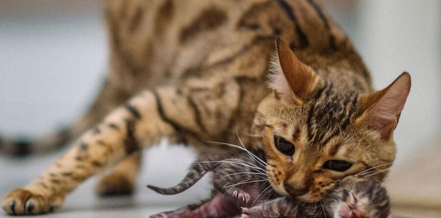 Кошки помогают выжить после инфаркта и спасают от катастроф