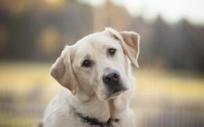 В Украине продолжается истребление собак
