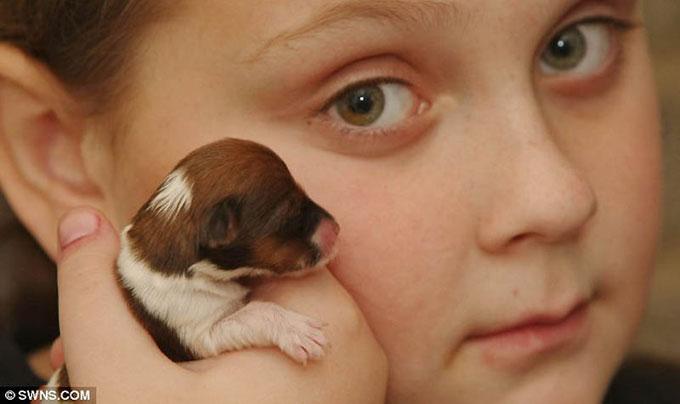 В США живет самая маленькая собака в мире (ФОТО)