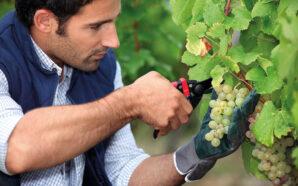 Больше грузинского вина, чем украинцы, пьют только в самой Грузии