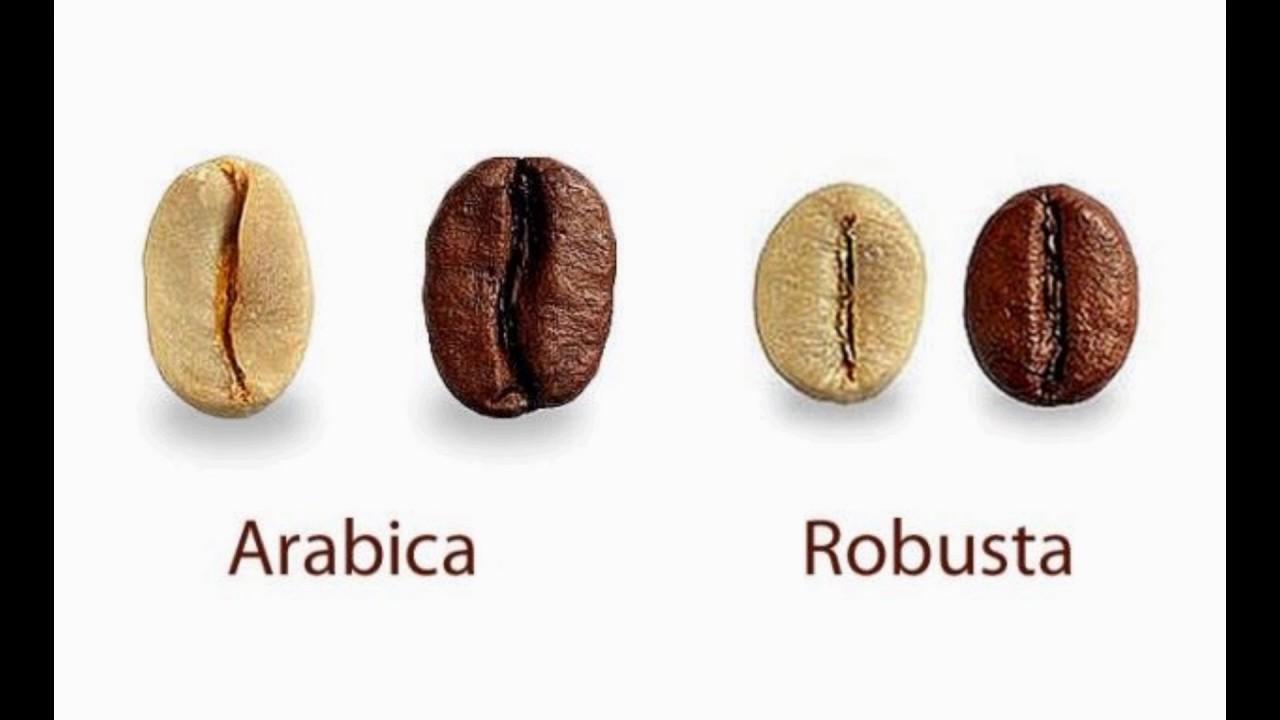Что выбрать арабику или робусту?